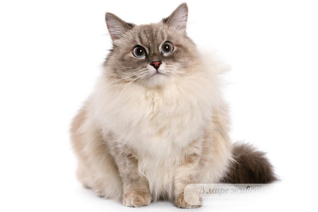Корма для кошек в Подольске
